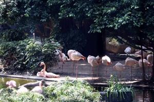 香港春意盎然 鳥語花香